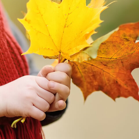 Boy holding fall leaves